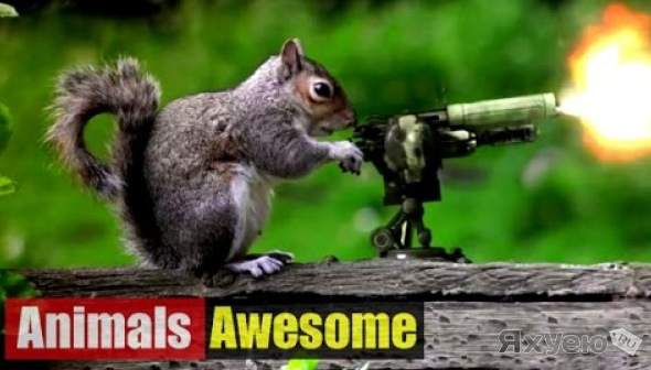 Animals Awesome / Funny compilation #1